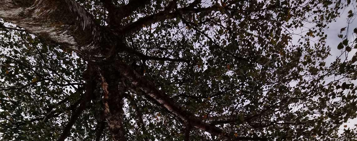 Walking Meditation 3 von Dr. Joe Dispenza – Mitten im Unbekannten